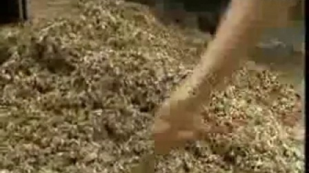 白平菇鲍鱼菇与金耳视�c,食用菌shiyongjun