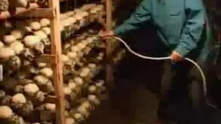 银耳种植的全过程之银耳栽培技术_高清视频食用菌shiyongjun