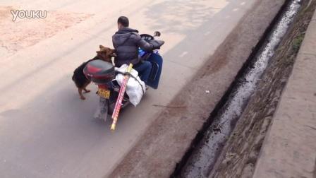 狗狗会自己上摩托车