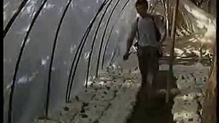灰树花栽培技术及虎掌菌视�c,食用菌shiyongjun