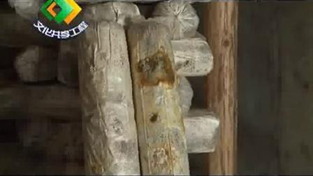 袋料灰树花两季出菇及河南食用菌视�c,食用菌shiyongjun