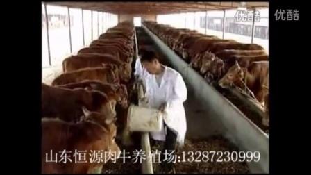 肉牛夏季饲养技术视频