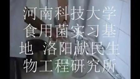 食用菌金针菇液体菌种摇瓶制作技术_标清食用菌shiyongjun