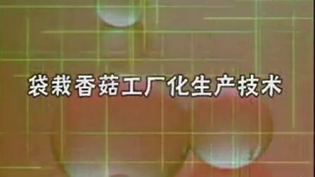 食用菌灰树花袋料香菇工厂化生产技�c,食用菌shiyongjun