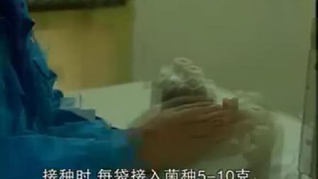 食用菌生产技术:黑木耳栽培管理技�c,食用菌shiyongjun
