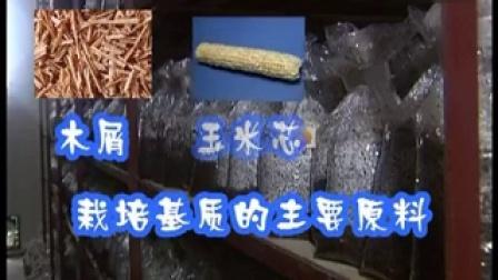 《金针菇工厂化优质高效栽培技术?,食用菌shiyongjun