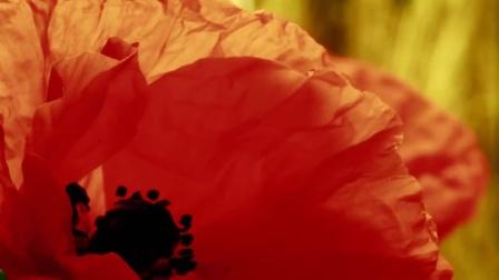 花开炸裂激昂狂想曲短片《惊喜的大自然》