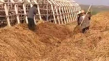 05-食用菌巴西菇栽培技�c,食用菌shiyongjun