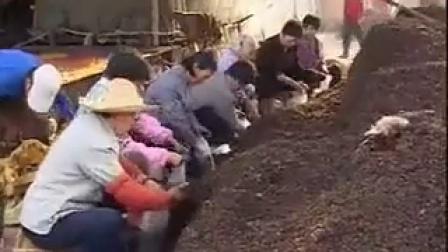 实用技术\u2014\u2014茶树菇提级增值栽培技�c,食用菌shiyongjun