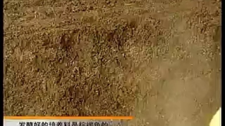 蘑菇种植之北方冷凉地区平菇发酵料栽培技�c,食用菌shiyongjun