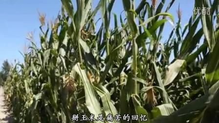 掰玉米之歌-粉红色的回忆版掰玉米