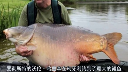 獵奇新闻  钓上80斤的超级大鱼