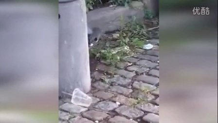 纽约鸽子和老鼠街头惨烈决斗 网友:真是活久见