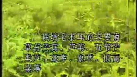 菌草栽培竹荪、灵芝立体种植高产栽培技�c,食用菌shiyongjun