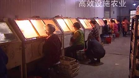 金针菇工厂化优质高效栽培技术_1之金针菇袋料栽培第二�,食用菌shiyongjun