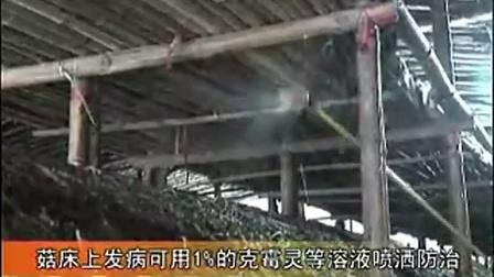大棚草菇栽培技术_2之大棚草菇栽培技术下�食用菌shiyongjun