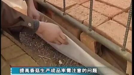 瓶筐体全自动金针菇生产立体种植高产栽培技�c,食用菌shiyongjun