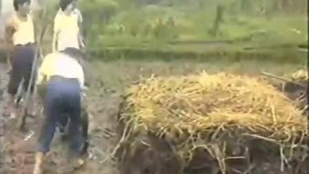 农业创业食用菌栽培技塑料袋地栽黑木耳立体种植高产栽培技�c,食用菌shiyongjun