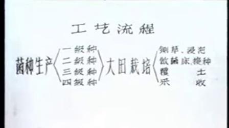 致富故事凤尾菇的蔬菜化种植之立体种植高产生产技�c1524食用菌shiyongjun