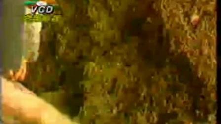 小本新项目视频黑木耿平菇栽_立体种植高产栽培技�c,食用菌shiyongjun