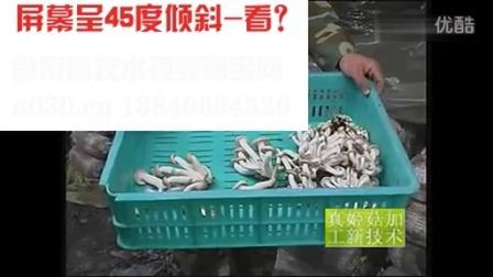 农业养殖食用菌平菇栽培技术之食用菌栽培技�c,食用菌shiyongjun