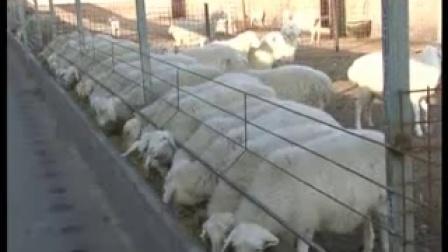 我市首家湖羊�B殖基地以衣服上�r�d牧��收富民_baofeng��l