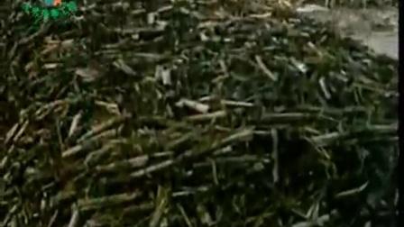 农业科技玉米秸秆栽培双胞蘑菇_1立体种植高产栽培技�c,食用菌shiyongjun