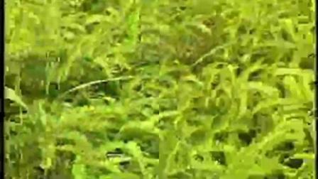 草根创业故事菌草栽培竹荪上立体种植高产栽培技�c,食用菌shiyongjun