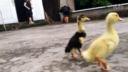 长得像鸭子的动物