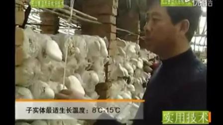 农业创富白灵菇工厂化栽培视频之无公害白灵菇栽培技能_3_1食用菌shiyongjun