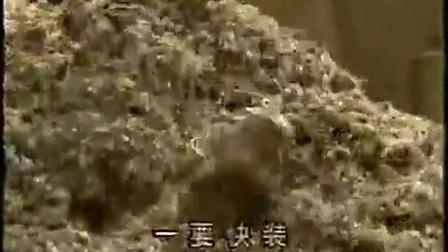 农业种植金针菇高产栽培技巧之金针菇袋料栽培下载更清晰yx)食用菌shiyongjun