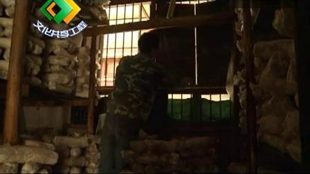 农村袋料灰树花两季出菇立体种植高产栽培技�c,食用菌shiyongjun