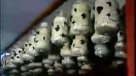 农业创富项zgz黑木耳、平菇立体培育高产栽培技�v,食用菌shiyongjun