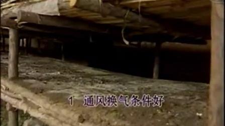 农业创富食用菇制作之食用菇鸡腿菇优质栽培技�v,食用菌shiyongjun