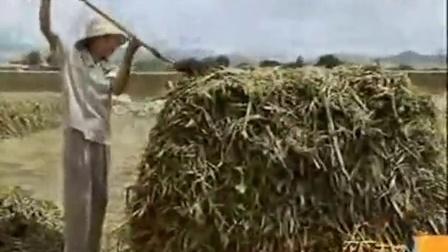 乡村发家故事褐口蘑穿龙薯蓣之褐口蘑菇栽培技�v,食用菌shiyongjun