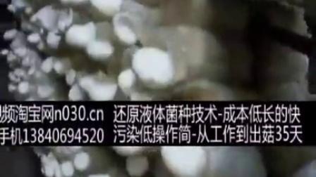 创业故事食用菌白灵菇种植害虫及防沿,食用菌shiyongjun