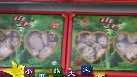 发家致富好项目袋料香菇栽培技术之食用菌生产杨家_1食用菌shiyongjun