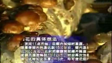 好的创业项目花菇立体栽培立体种植高产栽培技�c,食用菌shiyongjun