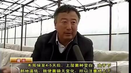 农业科技大棚吊袋木耳管理要点立体种植高产栽培技�c,食用菌shiyongjun