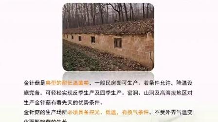 致富项目金针菇栽培技�c第之金针菇的高产栽培技�c,食用菌shiyongjun