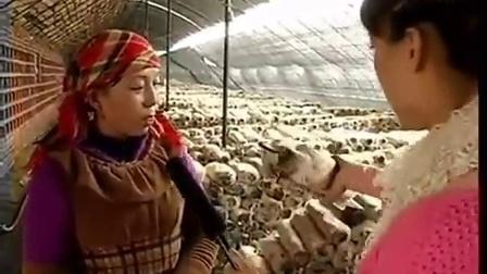 创富发家洛阳银耳栽培技能视频立体培育高产栽培技能标��,食用菌shiyongjun
