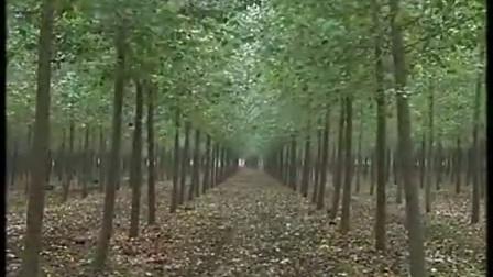 致富养殖林下玉米芯栽培鸡腿菇之鸡腿菇的栽培技�c,食用菌shiyongjun
