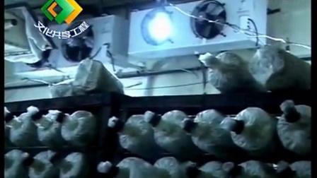 农业好项目珍稀食用菌反季节立体种植高产栽培技�c,食用菌shiyongjun