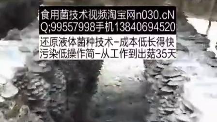 农业科技秋季玉米芯发酵栽培平菇立体种植高产栽培技�c,食用菌shiyongjun