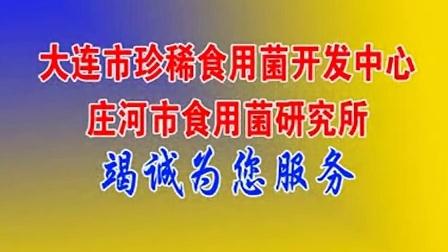 发家好项目种大球盖菇温室大棚反季立体培育高产栽培技�v,食用菌shiyongjun