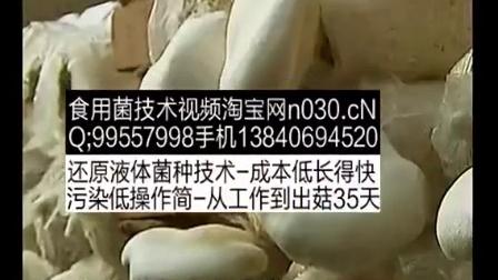 农民致富食用�K白灵菇种植_食用菌立体种植高产栽培技�c,食用菌shiyongjun