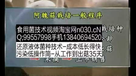 致富小项目食用菌 阿魏菇种植_食用菌立体种植高产栽培技�c,食用菌shiyongjun