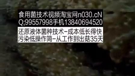 创业技术食用菌立体种植高产栽培技术视频之白玉菇栽培技术大全视频教稿,食用菌shiyongjun