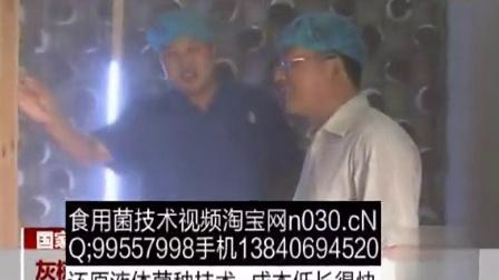致富小项目灰树花和银耳生产基地国家食用菌工程技术研究中忿,食用菌shiyongjun