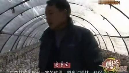 农业技能葡萄藤种香菇农夫善动脑子多赢利高产栽培技�v,食用菌shiyongjun